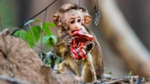 How Plastic Affect Wildlife