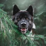 Which Steps to take if your Dog is infected with Harvest Mites this Autumn
